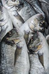 Gilt-head bream at fish market
