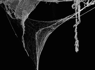 Horror cobweb or spider web in ancient thai house isolated on black background