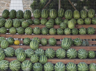 watermelon on the shelf
