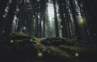 Photo sur Toile Foret magical lights sparkling in mysterious forest at night