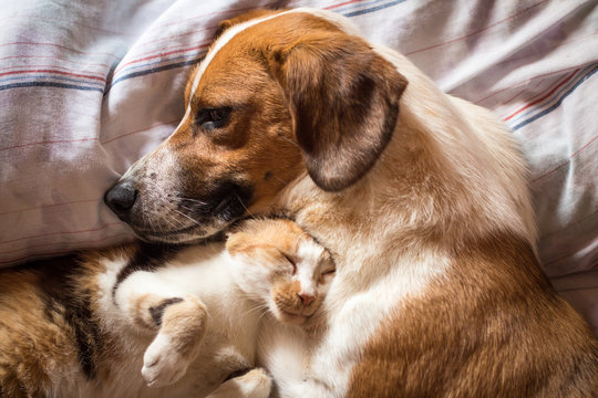 Dog and cat cuddle on bed