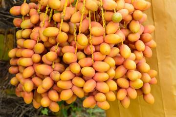 Date palm fruit (Phoenix dactylifera)