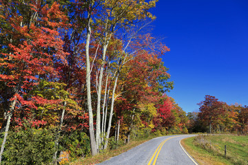 Rural Country Road in the Fall