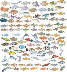 All fishes