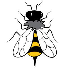 Overhead of Bumblebee Insect