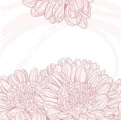 Line drawings pink chrysanthemum grunge background