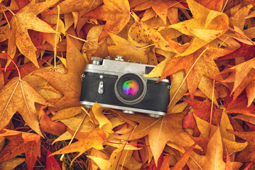 Vintage Photo Camera in Dry Maple Leaves