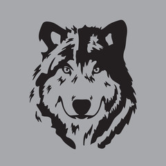 wolf face in gray background