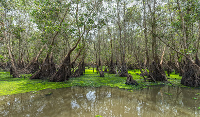 Tra Su cajeput forests typical of wetland ecosystems of mangroves, it has a rich flora and fauna resources to feed people in the area but is preserved. untouched beauty where eco-tourism for everyone