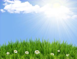 green grass background with flowers.Sunmmer sunburst