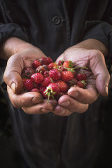 Strawberry lie in male hands