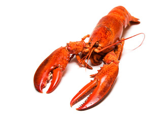 Boiled lobster on white background