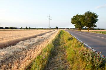 Getreidefeld Ditzingen