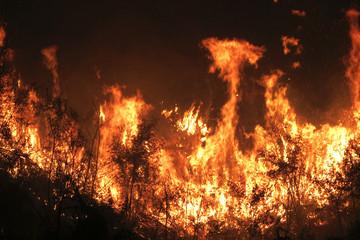 Arvores sendo queimadas