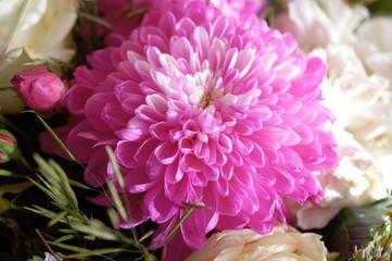 The chrysanthemum flower
