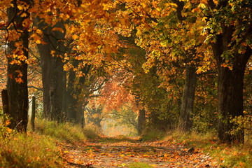 Sunny Autumn country scene