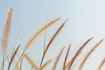 reed flower