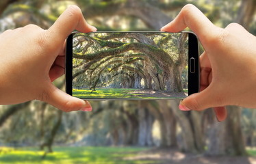 Women taking picture of tree filled landscape on smartphone in Charleston South Carolina on a plantation