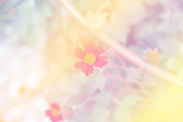 beautiful Flower with soft focus color filtered background