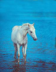 whait horse