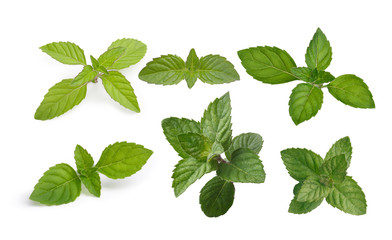 Mint leaves collection