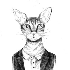 Fototapete - Hipster cat dressed up in urban style