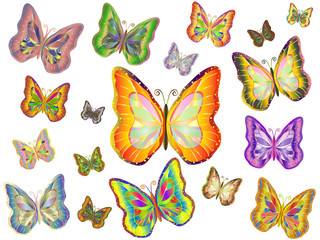 Many colorful butterfly with open wings.