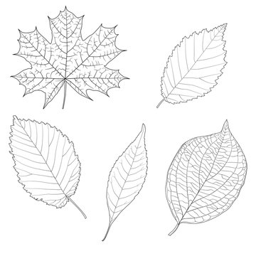 Leaf Isolated Vector Set
