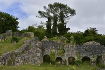 La végétation dans les ruines des arènes gallo-romaines de Saintes