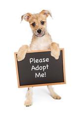 Fototapete - Smiling Dog Holding Adopt Me Sign