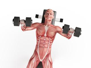 exercise illustration - bench press
