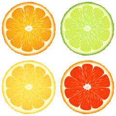 Citrus slices. A set of four - orange, lime, lemon and grapefruit. Vector design elements.