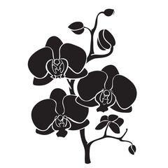 Silhouette orchid branch