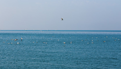 Gull on the Bosphorus