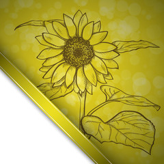 Sketch  sunflower background