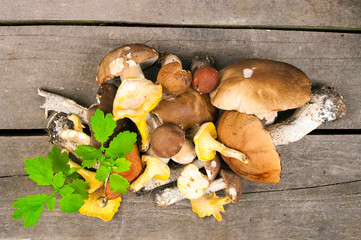Mix of mushrooms on wooden background