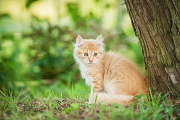 Little red kitten sitting outdoors in summer