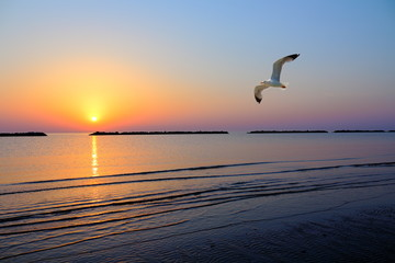 Un gabbiano vola all'alba lunga la riviera romagnola vicino Cesenatico