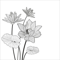 Beautiful lotus flower line illustration. Vector abstract black