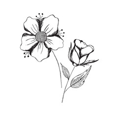 hand, draw, sketch, flowers, vector, illustration, isolated on white background