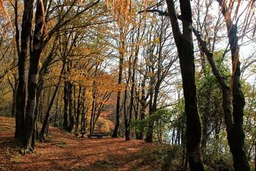 bench in autumn grove