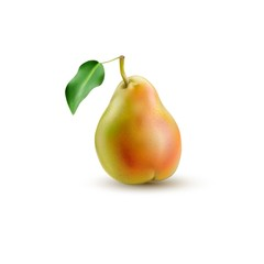 Pear realistic illustration.