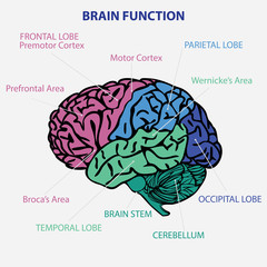 BRAIN FUNCTION VECTOR