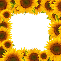 A frame (border) made of sunflower heads