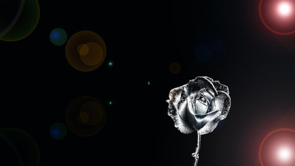 Black rose with flare