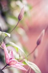 Spring flower close-up. Shallow DOF.