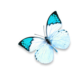 Blue Butterfly  on the white isolated background