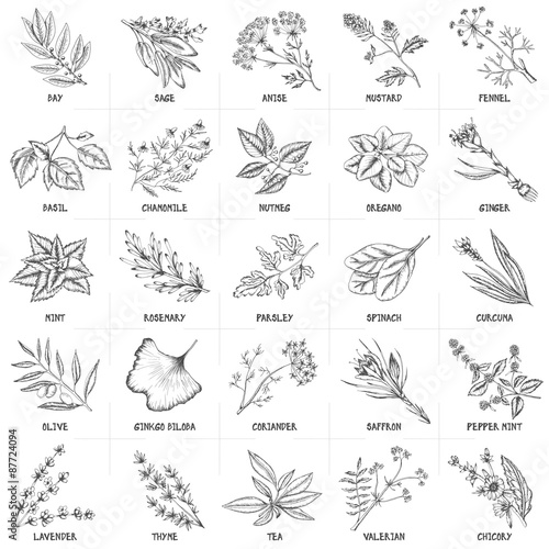 u0026quot hand drawn vector set of herbs and spices vintage