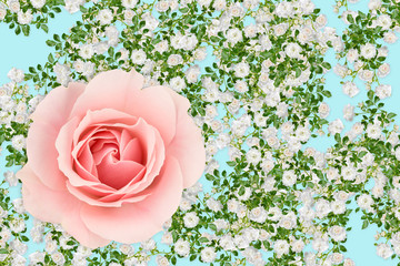 Pink and white rose montage on pastel blue background.