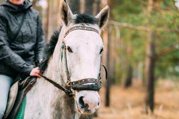 Close Up Portrait Of White Horse